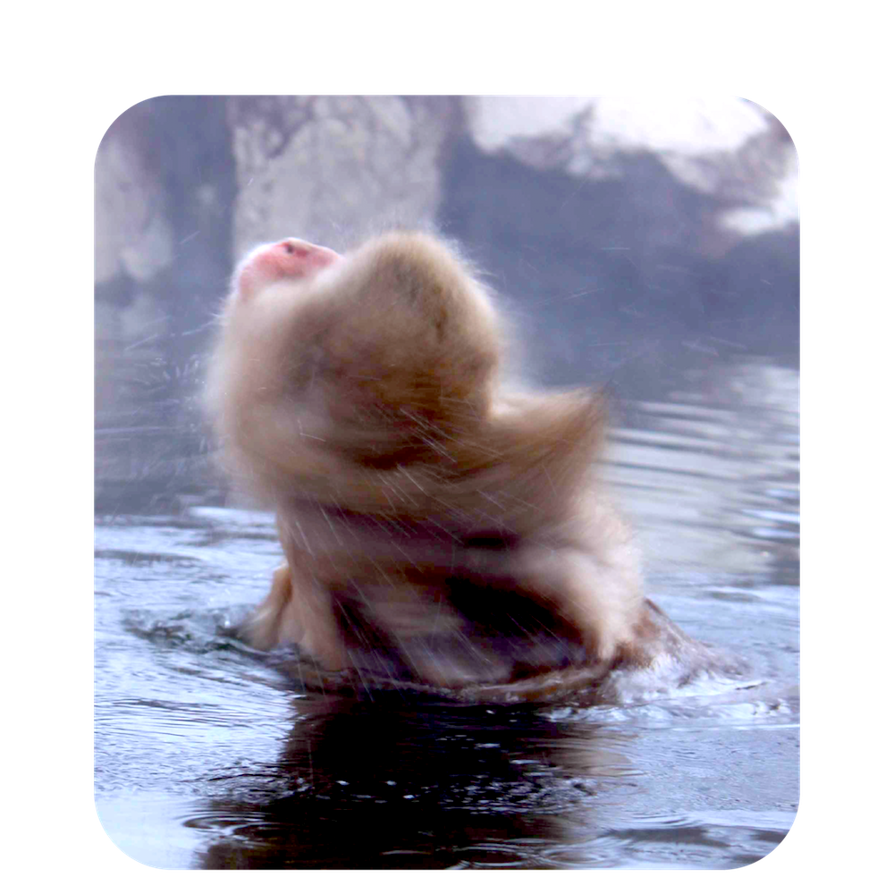 Monkey bathing in Onsen